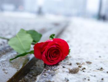 eine rote Rose liegt im schmutzigen Schnee auf den Schienen einer Straenbahn